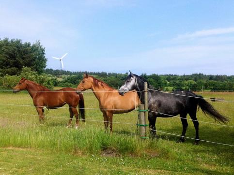 Pferdefuchs - Dagmar Fuchs - Coaching mit Pferden - Seminare für Frauen - Reitunterricht